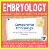Comparative Embryology Interactive Lesson - Google Slides