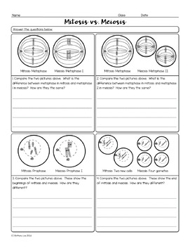 Compare Meiosis and Mitosis Biology Homework Worksheet