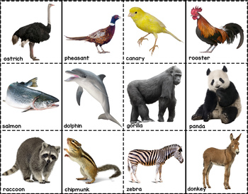 Compare and Contrast: Animal Cards