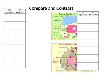 Compare and Contrast Animal and Plant Cells