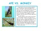 Compare and Contrast informational text: Ape and Monkey