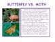 Compare and Contrast informational text: Butterfly and Moth
