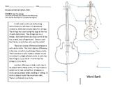 Compare and Contrast Cello vs. Violin