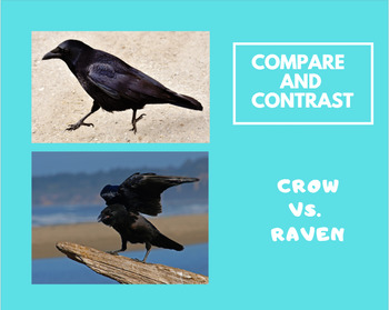 Compare and Contrast informational text: Crow and Raven