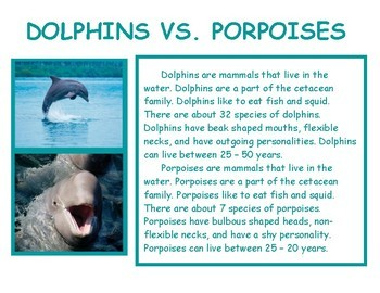 Compare and Contrast informational text: Dolphins and Porpoises