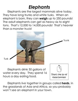 Compare and Contrast: Elephants and Giraffes