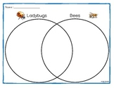 Compare and Contrast Graphic Organizers for Insects