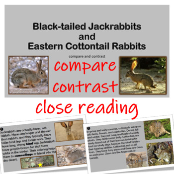 Compare and Contrast Jackrabbits and Cottontail Rabbits Informational Cards