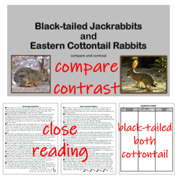 Compare and Contrast Jackrabbits to Cottontail Rabbits Reading Passages