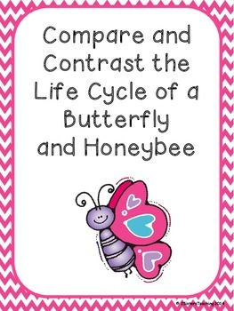 Compare and Contrast: Life Cycle of a Butterfly and Honeybee