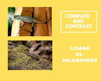 Compare and Contrast informational text: Lizards and Salamanders