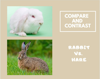 Compare and Contrast informational text: Rabbit and Hare