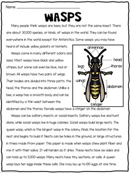 Compare and Contrast Reading Passages: Insects and Bugs