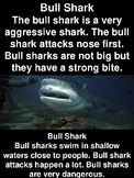 Compare and Contrast Reading Passages and Questions-Bull Shark vs Tiger Shark