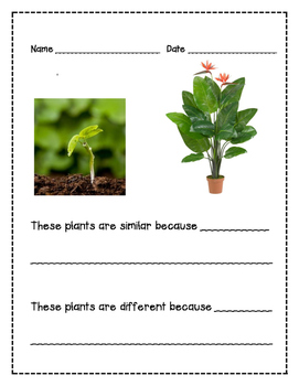 Compare and Contrast/Similarity and Difference PLANTS Writing