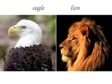 Compare and Contrast with Animals
