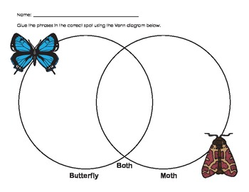 Compare butterfly and moth