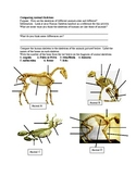 Comparing Animal Skeletons