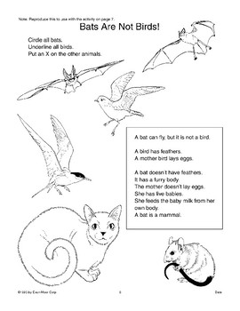 Comparing Bats and Birds