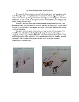 Comparing Complete and Incomplete Metamorphosis Writing Prompt