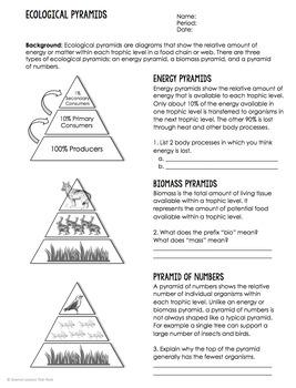Comparing Ecological Pyramids