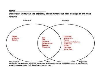 Comparing Eukaryotic and Prokaryotic Cells