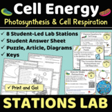 Comparing Photosynthesis & Cell Respiration Stations Activity