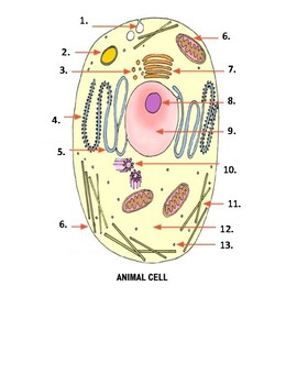 Comparing Plant & Animal Cells