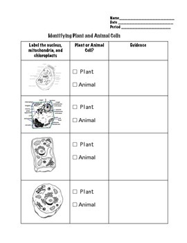 comparing plant and animal cells worksheet by geekology tpt. Black Bedroom Furniture Sets. Home Design Ideas