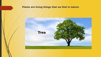 Comparing Plants' Characteristics