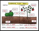 Doodle Notes - Comparing Plants Fold (K-1) by Science Doodles