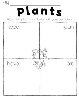 Comparing Plants and Animals in Kindergarten