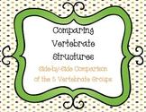 Comparing Vertebrate Structures