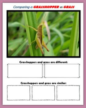Comparing Wildlife
