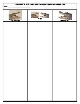 Comparing and Contrasting Alligators vs Crocodiles