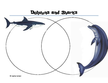 Comparing and Contrasting Dolphins and Sharks