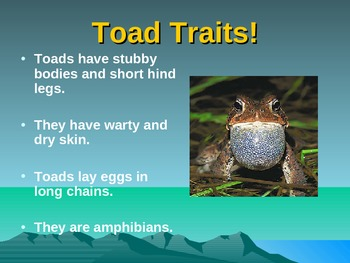 Comparing and Contrasting Frogs and Toads - PowerPoint Presentation