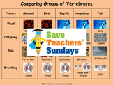 Comparing animal kingdoms (5 main ones) Lesson plan and Worksheets