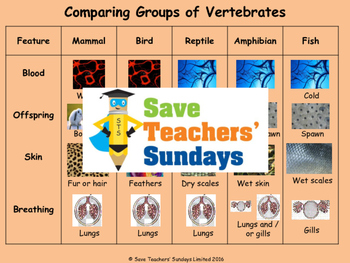 Comparing organisms (4 lessons)