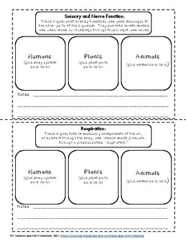 Comparing the Function of Organ Structures in Humans, Plants and Animals I.N.
