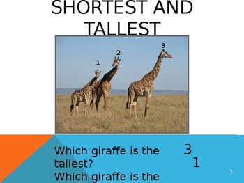 Comparing the Height and Length of More Than Two Objects