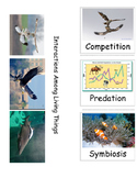 Competition Predation and Symbiosis Foldable