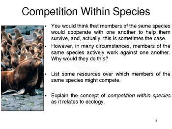 Competition in an Ecosystem