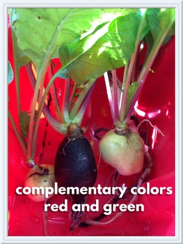 Complementary Colors Visual