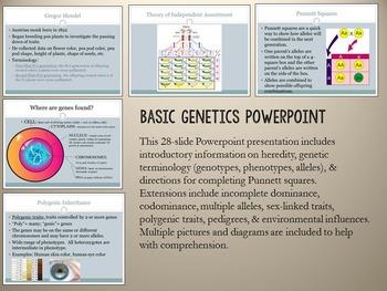 Genetics Unit- Basic Heredity, Mendelian Inheritance, Traits, Genetic Disorders