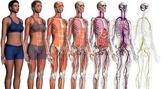 Complete Human Anatomy & Physiology Course Growing Bundle