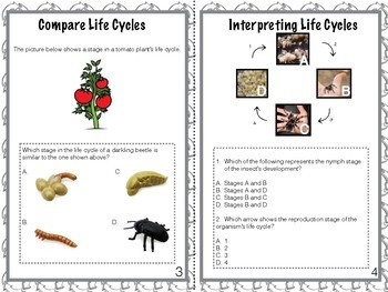 Task Cards: Complete/Incomplete Life Cycle