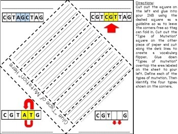 Life Science & Biology Interactive Notebook Bundle