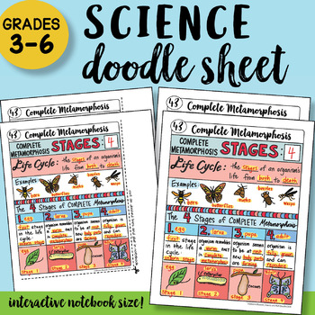 Complete Metamorphosis Doodle Notes Sheet - So Easy to Use! PPT included