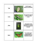 Complete Metamorphosis Sort